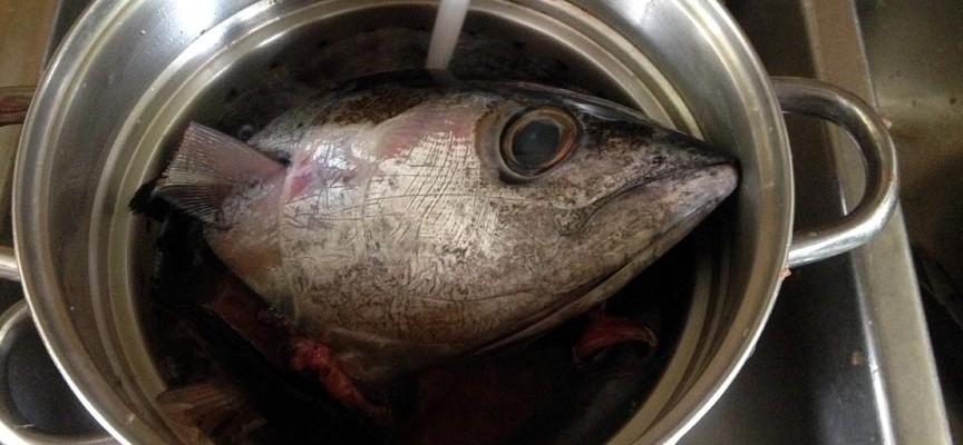 Ahi tuna fish soup for Ahi tuna fish